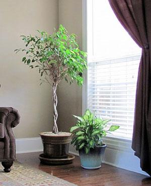 комнатные растения 14