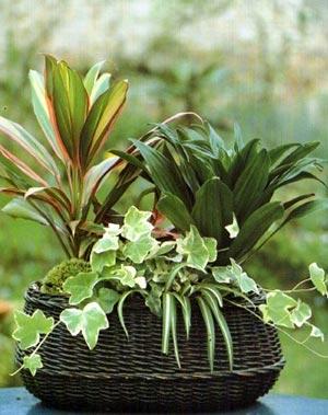 комнатные растения 127