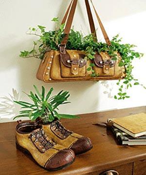 комнатные растения 103