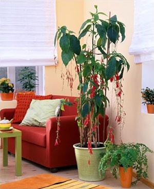 комнатные растения 116