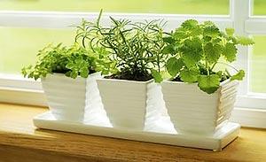 комнатные растения 69