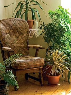 комнатные растения 112