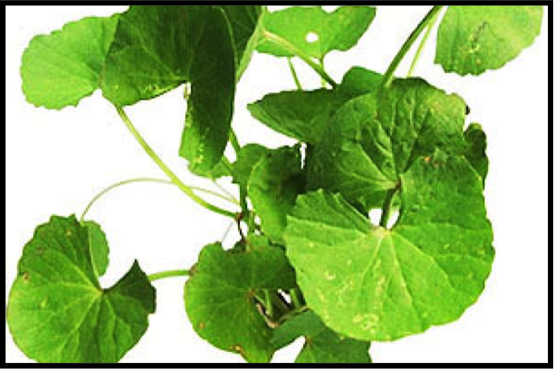 the benefits of gotu kola