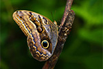 owl-butterfly-featured3