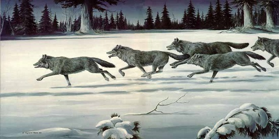 Lead your wolf pack