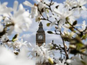 27 March 2015: The Big Ben clock tower is seen through blooming flowers in central London