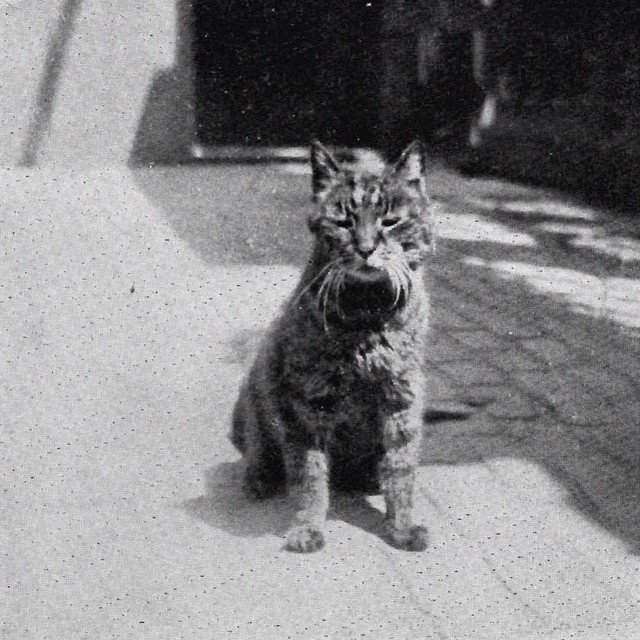 For #AprilFools today, here are some interesting (and true!) stories about the Museum.  This is Mike the cat, who assisted in keeping the Main Gate at the British Museum from Feb 1909 to Jan 1929. When he died, the former Keeper of Egyptian and Assyrian Antiquities, Sir E A Wallis Budge, wrote a whole pamphlet about him. His obituary was featured in both the London Evening Standard and Time magazine! Find out more about Mike the cat at britishmuseum.tumblr.com #cat #Museum
