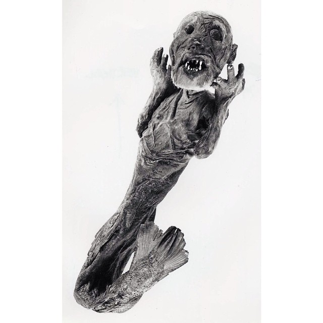 For #AprilFools today, here are some interesting (and true!) stories about the Museum.  Did you know there was a merman (actually part monkey, part fish!) on display in the Enlightenment Gallery (Room 1)? This 'merman' was donated by HRH Prince Arthur of Connaught (1883–1938), grandson of Queen Victoria, and was said to have been 'caught' in Japan during the 18th century. It was given to Prince Arthur by an individual named Arisue Seijiro.  The British Museum's 'merman' is displayed in the Enlightenment Gallery as an example of the kind of 'curiosity' that was found in early collections before the more encyclopaedic and reasoned approach to collecting that evolved through the 1700s. In this context it helps to show how museums changed during the 18th century from cabinets of curiosity to the type of museums we are more familiar with today. #merman #mermaid