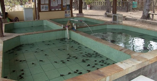 objek wisata gili trawangan lombok