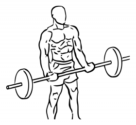 Bicep Curls with Barbell 1
