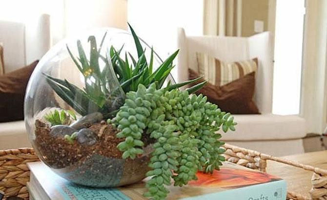 суккуленты и кактусы мини-садик 05