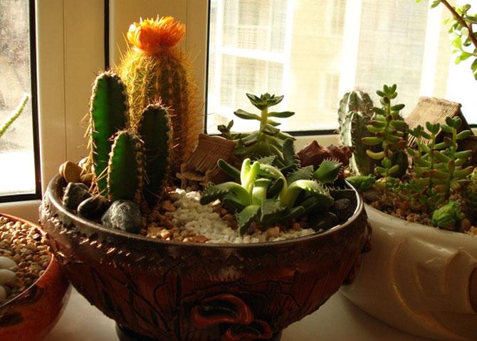 суккуленты и кактусы мини-садик 25