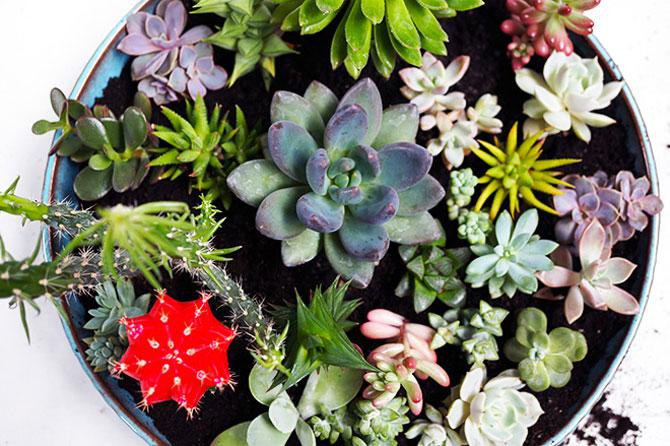 суккуленты и кактусы мини-садик 44