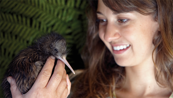 Kiwi Encounter, Rainbow Springs © Chris McLennan