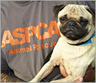 Join Team ASPCA - About Us Ad