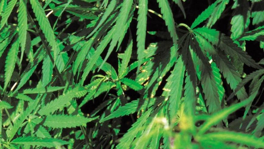 75-year-old faces drugs charges