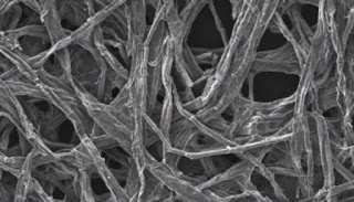 A sliver of wood coated with tin could make a tiny, long-lasting, efficient and environmentally friendly battery.