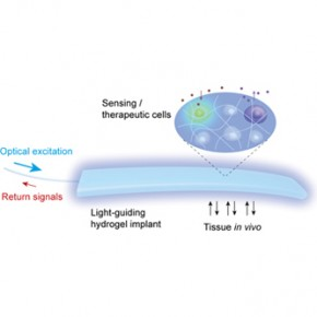 Light-Guiding Hydrogel Brings Optogenetics Closer to Clinical Application