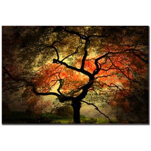 Trademark Fine Art Japansk I troch Philippe Sainte-Laudy Canvas Wall Art, 30x47-Inch