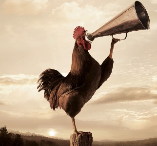 [Image: rooster-crowing-2.jpg]