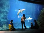 DAILY MAIL TRAVEL FEATURE Picture shows the National Marine Aquarium in Coxside, Plymouth.