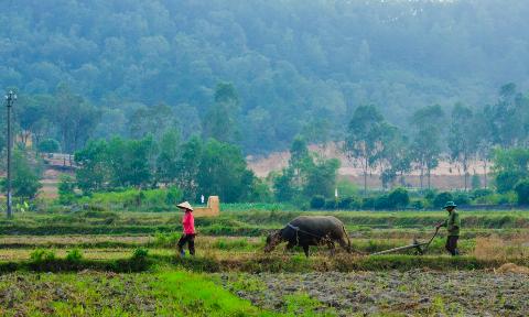 bacninh 6 Làng quê Bắc Ninh