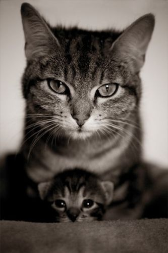 Cute little #kitten with her mother #cat
