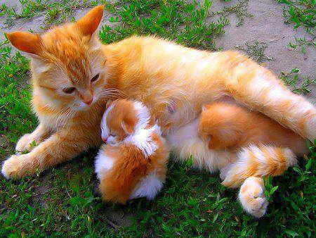 Follow the pic for more #Cutelittle #kittens sitting with #mothercat