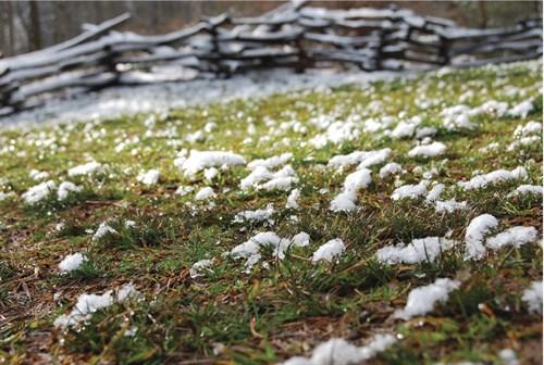snow melting on the ground
