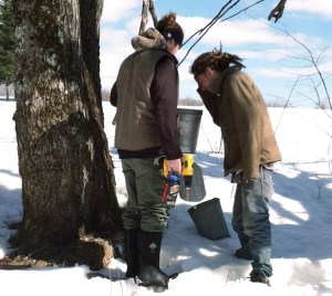 Kyle Schlosser, left, and a friend check sap in a bucket at Sandiwood Farm in Wolcott, Vermont. Photos courtesy of Sandiwood Farm.
