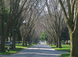 street with trees on the side