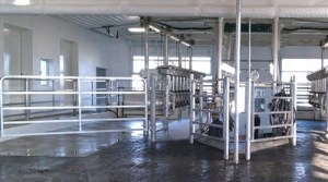 Thinking about cow flow during the design process is important. Take into consideration how many animals the farm has and how much that number might grow. This double- 12 parlor was built for Brook Corner Farm, a 280-cow farm in Lebanon, Pa.