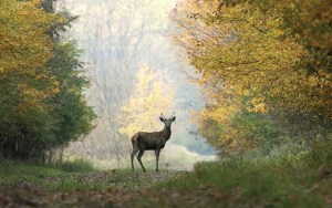A landowner who might say they're opposed to clear-cutting might also say they like seeing deer and grouse-two preferences at odds with one another.  Photo by sindlera/thinkstock.com.