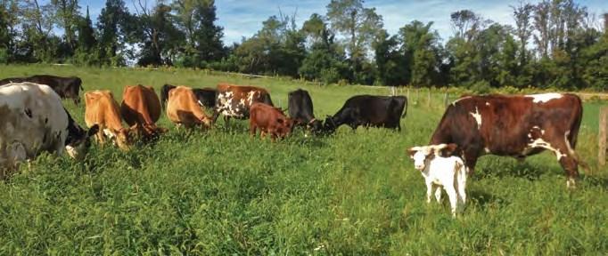 Keepsake Farm and Dairy