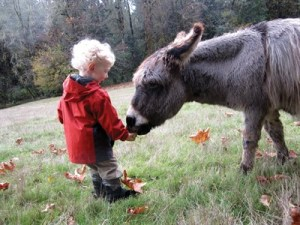 This young visitor to Leaping Lamb Farm enjoys time with Paco, the miniature donkey.  Photo by Melissa Carroll.