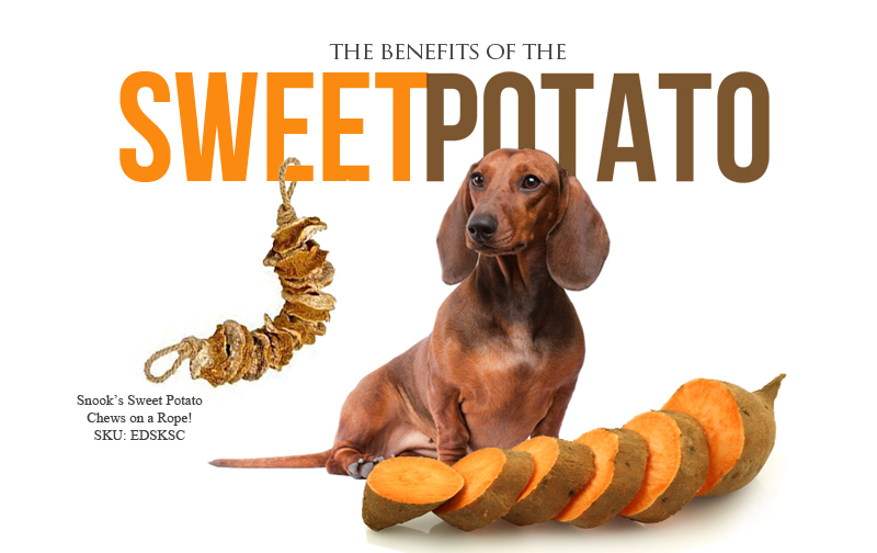 can sweet potatoes be good for dogs