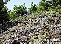 habitat of Ross' sedge