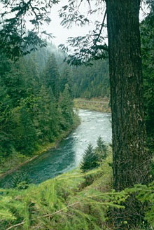 North Umpqua River Photo from Riverview Trail