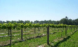 closer vineyards