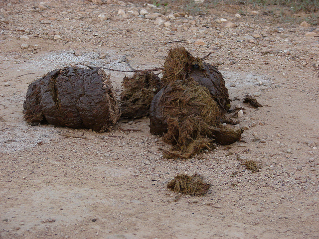 Elephant dung. Picture: Ian Barbour