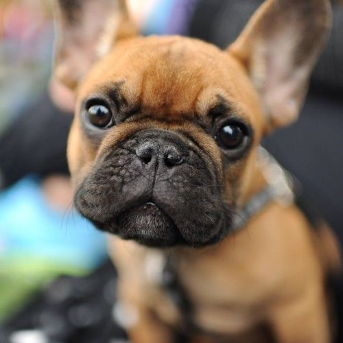 Funny dog in an angry mood