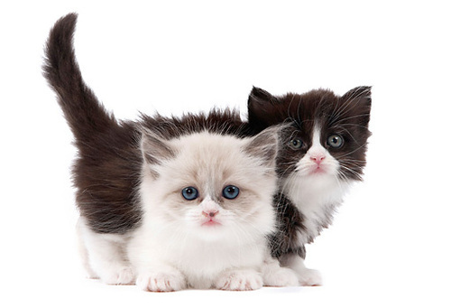 Two adorable little kittens