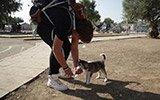 17岁难民带宠物狗逃亡500公里