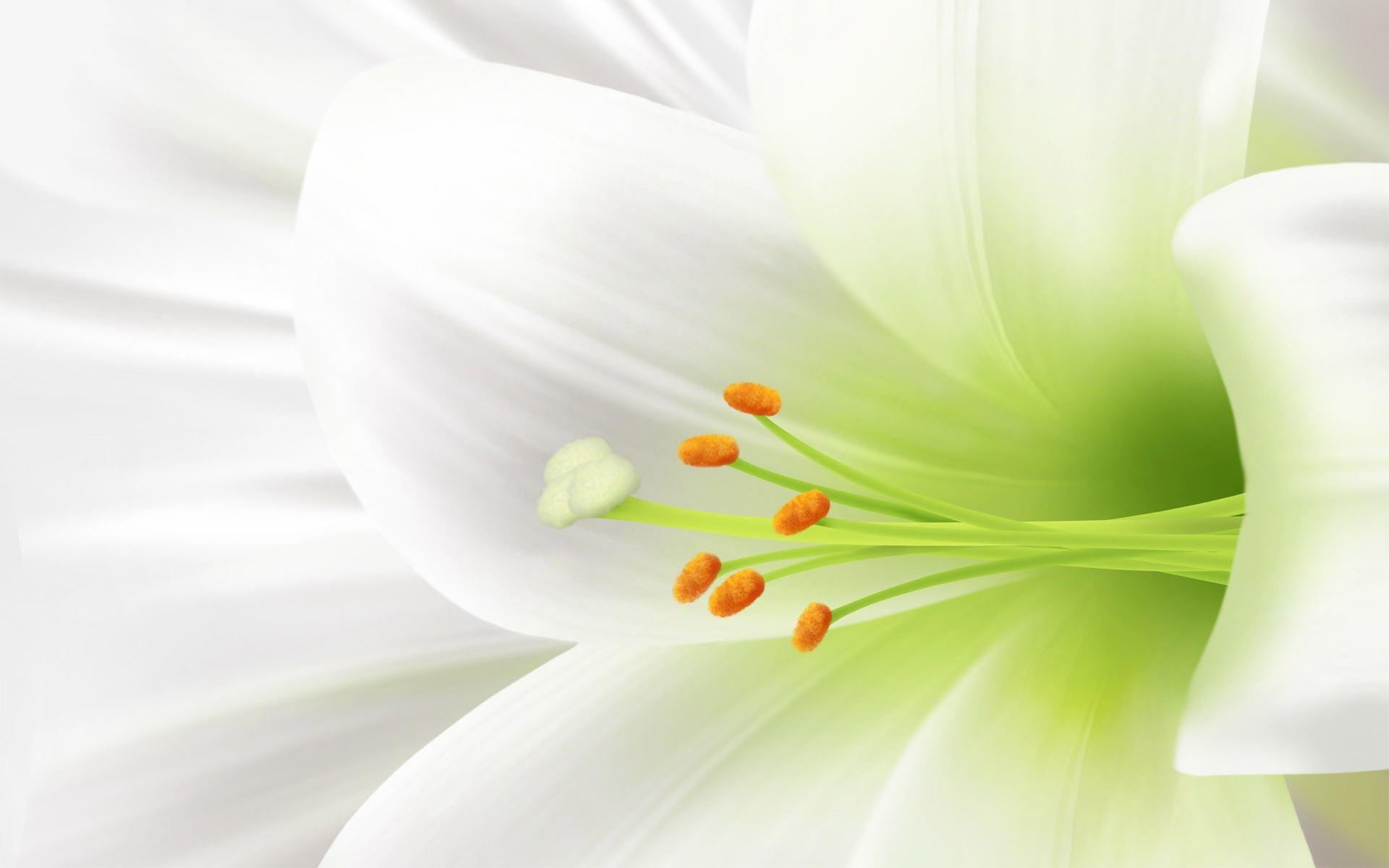 好看的百合花 非主流背景图片