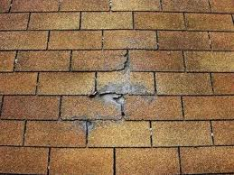 High winds can break off tree limbs which can damage roofs when the land on them. In some cases the branch will punch a hole through the roofing.