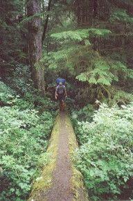 Wander auf Baumstamm