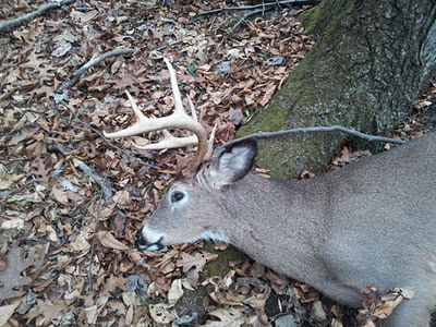 Whitetail deer from New York taken by bowhunter