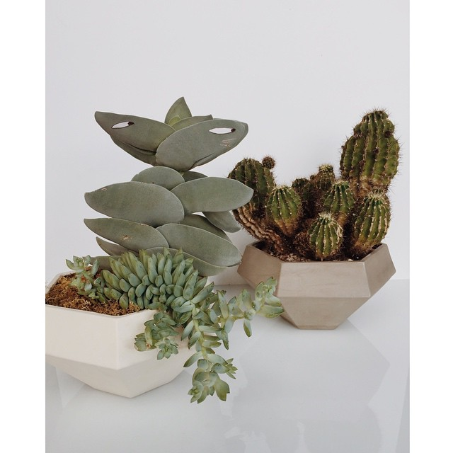 """""""Don't turn your back on a cactus. You never know where you stand with them."""" - #christopherwalken on #snl #plantswithgooglyeyes  Graphyne Planter on www.lightandladder.com"""