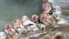 Japan: Jacuzzi with pals