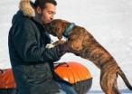 20 Men Who Get Emotional Over Dogs